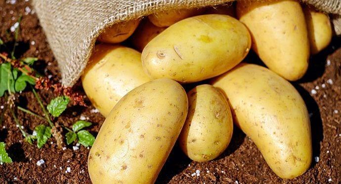 Czy ziemniaki mogą pomóc zachować prawidłową masę ciała?