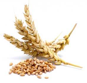 Celiakia, czyli stała nietolerancja glutenu