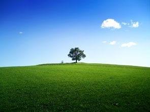 Dlaczego warto uczyć potomka ekologii?