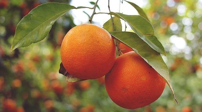 Moc pomarańczowej witaminy